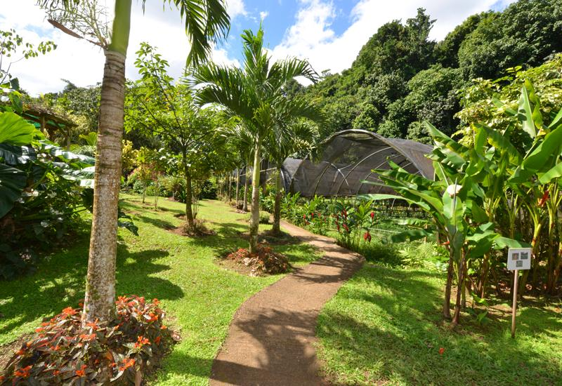Jardins de valombreuse petit bourg guadeloupe tourisme for Restaurant dans un jardin