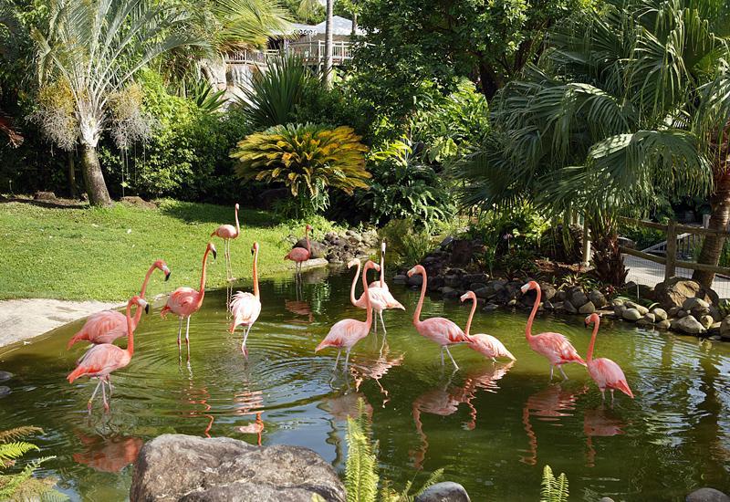 Jardin botanique deshaies guadeloupe tourisme for Camping le jardin botanique limeray